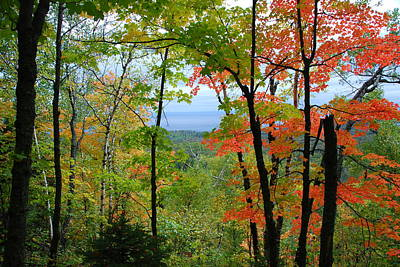 Photograph - Maples Against Lake Superior - Tettegouche State Park by Cascade Colors