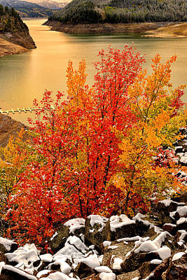 Photograph - Maples Along The Palisades by Greg Norrell
