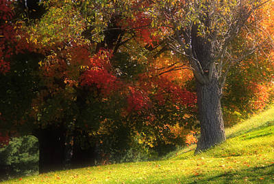 Photograph - Maples In Autumn by Jim Vance