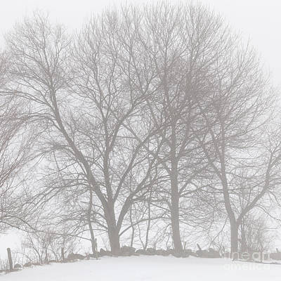 Photograph - Maples In Fog by Alan L Graham