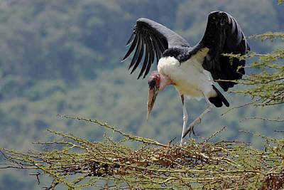 Photograph - Marabou Stork by Tony Murtagh