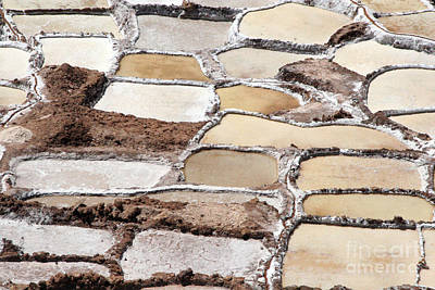 Winter Animals - Maras Salt Pans by Jason O Watson