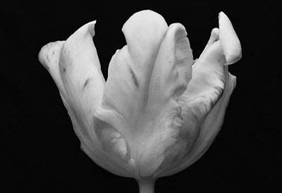 Photograph - Marble Effect. by Terence Davis