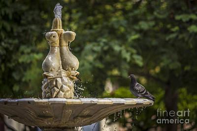 Kim Fearheiley Photography - Marble Fountain in Plaza de la Candelaria Cadiz Spain by Pablo Avanzini