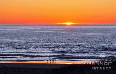 Photograph - Marbled Godwits Reflecting A Sunset by Susan Wiedmann