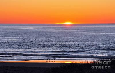Marbled Godwits Reflecting A Sunset Art Print