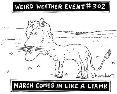 Wildlife Drawing - March Comes In Like A Liamb by Danny Shanahan