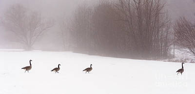 Photograph - March Of The Canadian Geese by Debra Fedchin