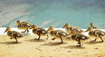 Baby Mallards Photograph - March Of The Ducklings by Fraida Gutovich