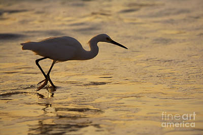 Waterfowl Photograph - March Of The Egret by Mike  Dawson