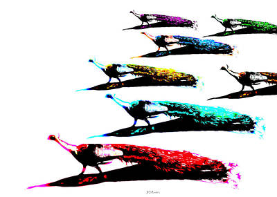 Photograph - March Of The Peacocks by Brian D Meredith