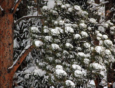 Photograph - March Snowfall by A K Dayton
