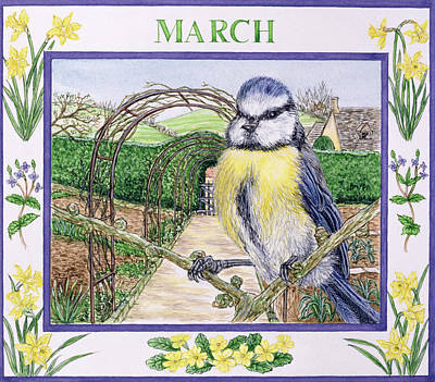 Blue Tit Photograph - March Wc On Paper by Catherine Bradbury