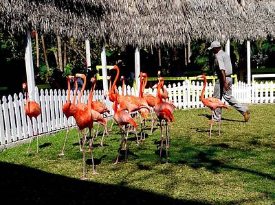 Photograph - Marching Flamingos by Keith Stokes