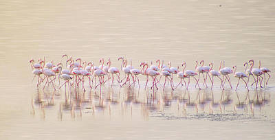 Sea Bird Photograph - Marching Pinks by Ahmed Thabet