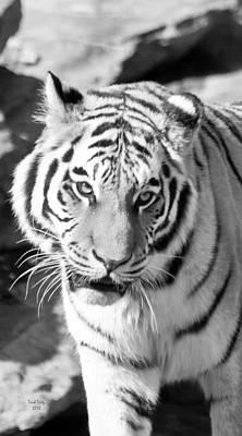 Tiger Mixed Media - Marcus by Trish Tritz