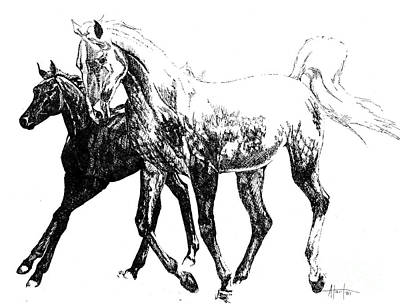 Drawing - Mare And Foal by Audrey Van Tassell