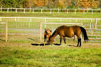 Fences Photograph - Mare And Foal In Autumn by Donna Doherty