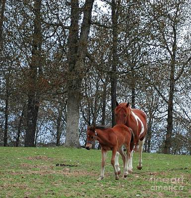 Mare And Foal Art Print by Kathleen Struckle