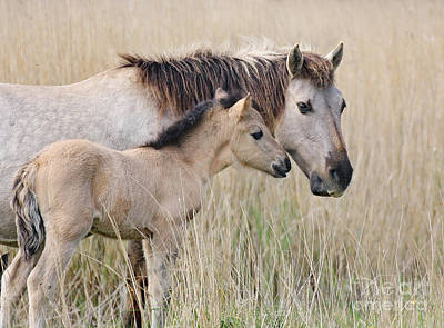 Photograph - Mare And Foal Konik Horse by Fun Cards