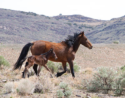 Photograph - Mare And Foal Running by Lula Adams