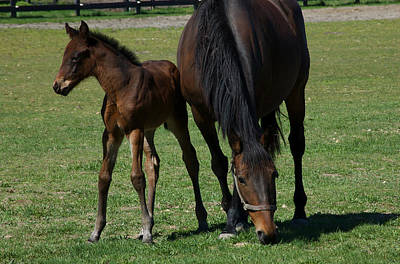Photograph - Mare And Her Foal 1 by Greg Vizzi