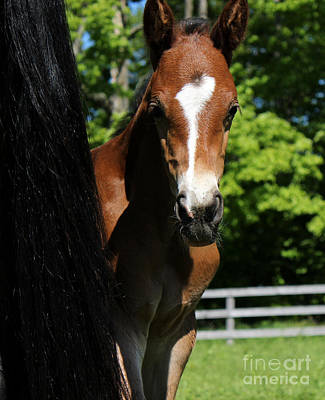 Photograph - Mare Foal33 by Janice Byer