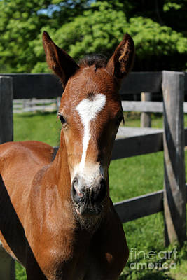 Photograph - Mare Foal42 by Janice Byer