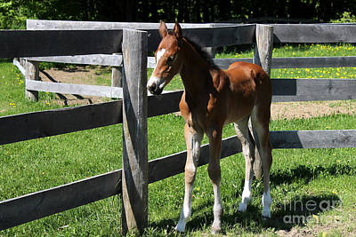 Photograph - Mare Foal44 by Janice Byer