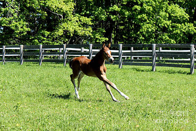 Photograph - Mare Foal47 by Janice Byer