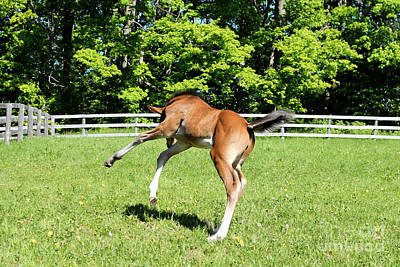 Photograph - Mare Foal48 by Janice Byer