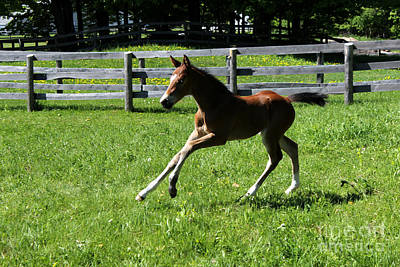 Photograph - Mare Foal55 by Janice Byer