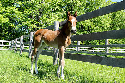 Photograph - Mare Foal58 by Janice Byer