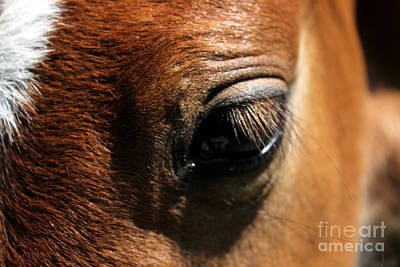 Photograph - Mare Foal61 by Janice Byer