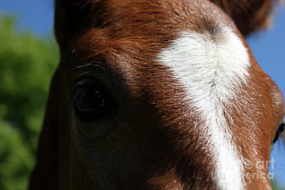 Photograph - Mare Foal62 by Janice Byer