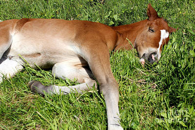 Photograph - Mare Foal81 by Janice Byer