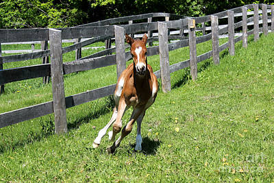 Photograph - Mare Foal92 by Janice Byer