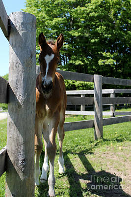 Photograph - Mare Foal94 by Janice Byer