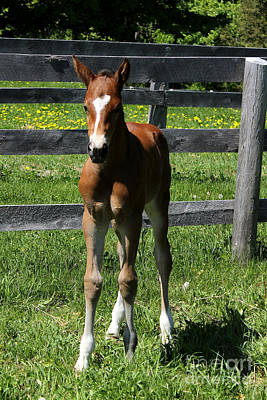 Photograph - Mare Foal96 by Janice Byer