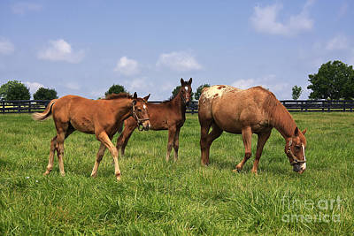 Kentucky Photograph - Mare Horse And Colts by Jill Lang