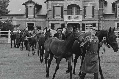 Working Photograph - Mares And Foals At The Farm Of Marie-helene De by Henry Clarke