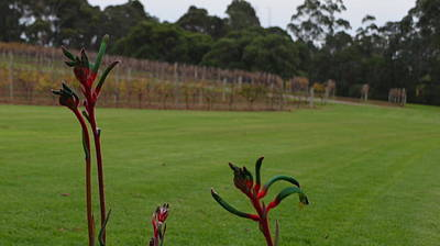 Margaret River Vineyard 1.2 Art Print by Cheryl Miller