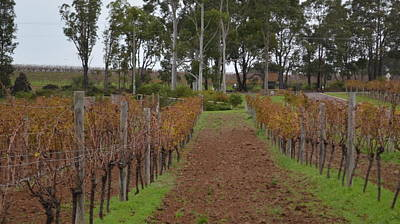 Photograph - Margaret River Vineyard 1.3 by Cheryl Miller