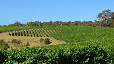Photograph - Margaret River Vineyard 1.4 by Cheryl Miller
