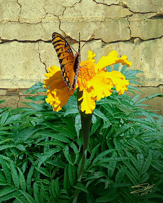 Photograph - Marigold Garden by IM Spadecaller