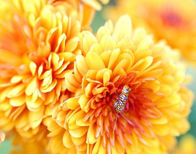 Pollinate Digital Art - Ailanthus Webworm Visits The Marigold  by Optical Playground By MP Ray