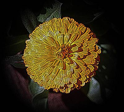 Photograph - Marigold Digitized by Louise Mingua