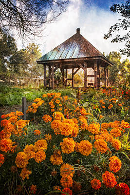 Marigolds Art Print by Debra and Dave Vanderlaan