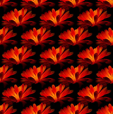 Photograph - Marigolds Greeting Card By Barbara Moignard by Artists for Altered Cats Cyprus