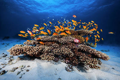 Fishes Photograph - Marine Life by Barathieu Gabriel